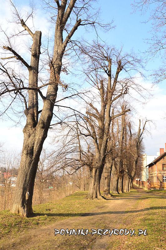 fragment pomnikowej alei w Ząbkowicach