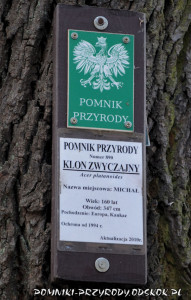 tabliczki na pomnikowych drzewach w Lubaniu