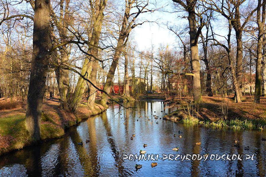 staw w Parku Strachowickim we Wrocławiu