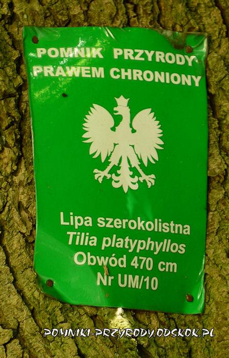tabliczka na pomnikowej lipie szerokolistnej