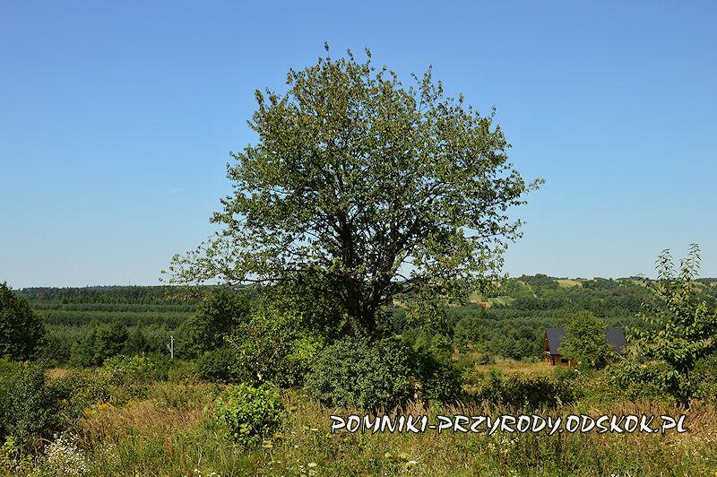 Tereszpol - pomnikowa skałka pod czereśnią