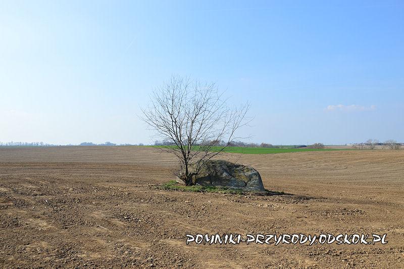 Jezierzyce - pomnikowy głaz
