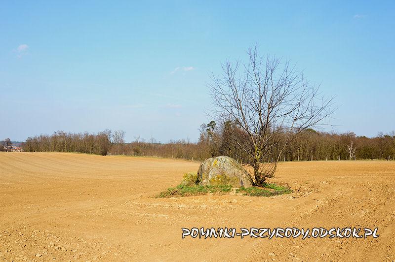 Jezierzyce w gminie Śmigiel - pomnikowy eratyk