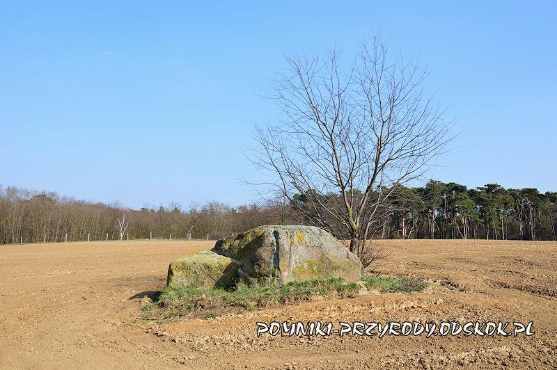 Jezierzyce w gminie Śmigiel - pomnikowy głaz