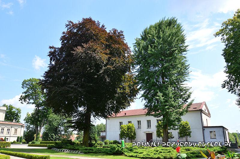 Park we Włoszakowicach - piękny buk i miłorząb