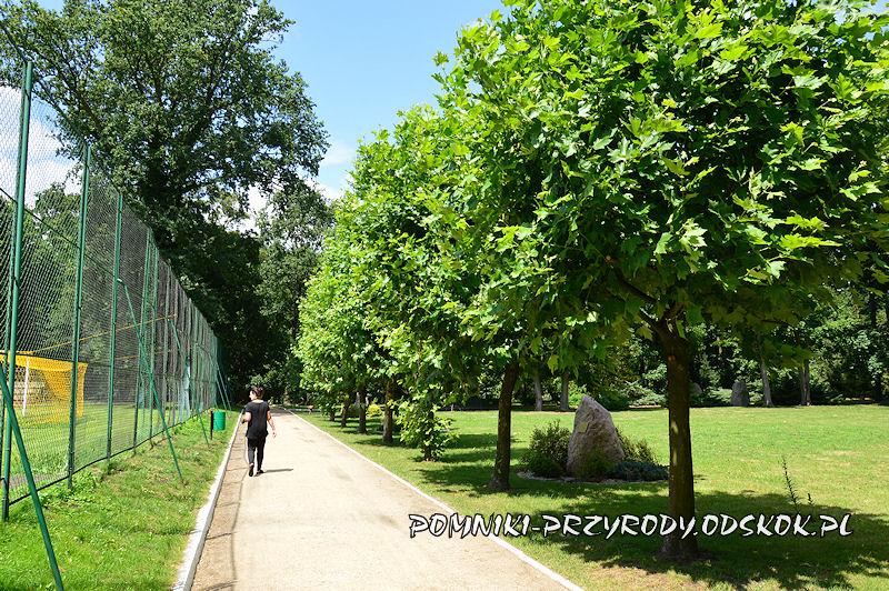 aleja platanowa w parku włoszakowickim