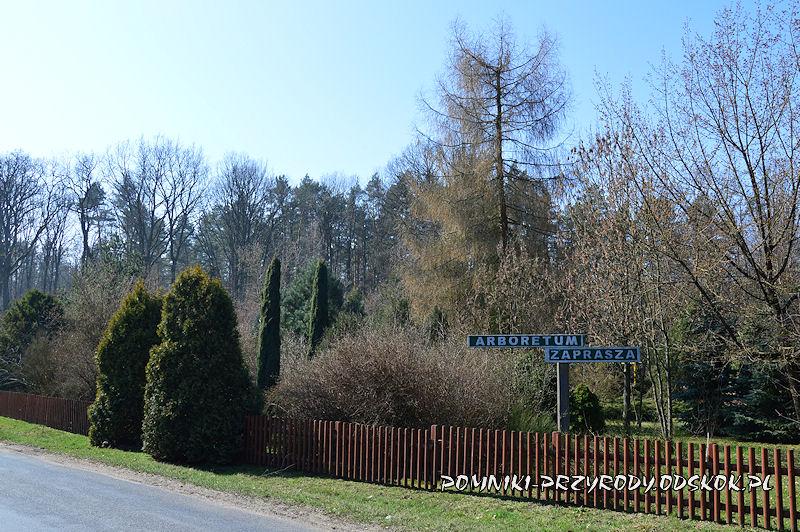 arboretum przy leśnictwie Krzyżowiec