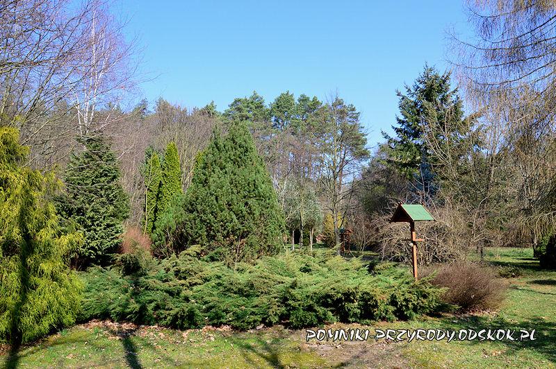 arboretum przy leśniczówce Krzyżowiec