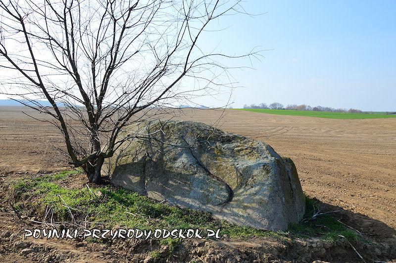 pomnikowy eratyk k. wsi Jezierzyce