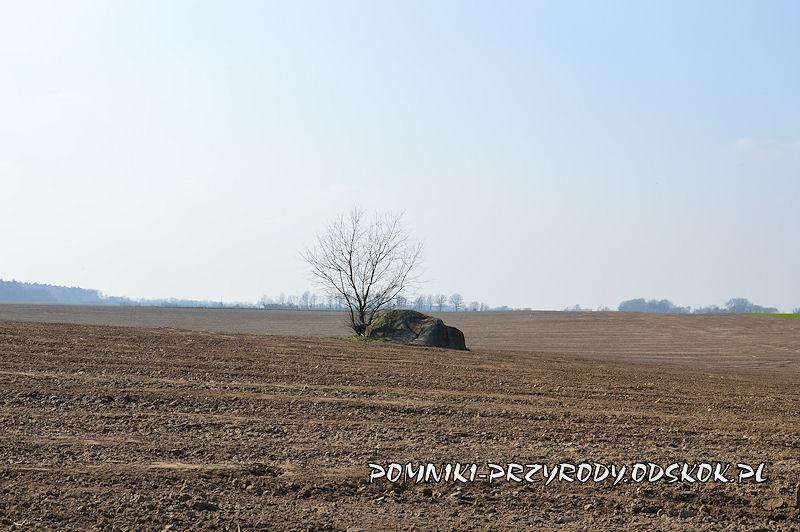 pomnikowy głaz leżący na polu we wsi Jezierzyce