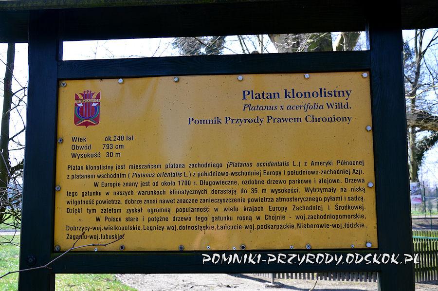 tablica przy pomnikowym platanie we Włoszakowicach