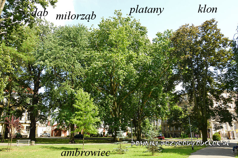 Park Miejski w Lesznie fotografowany latem