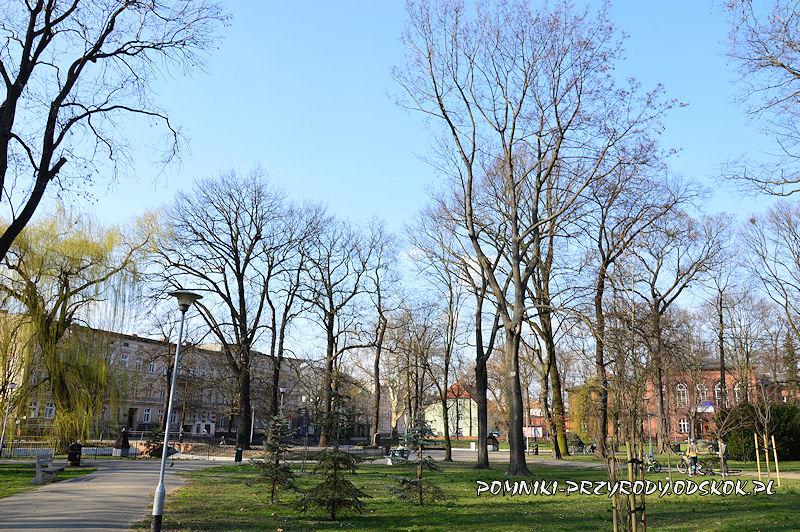 Park Miejski w Lesznie