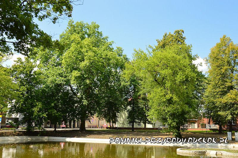 staw w Parku Miejskim w Lesznie