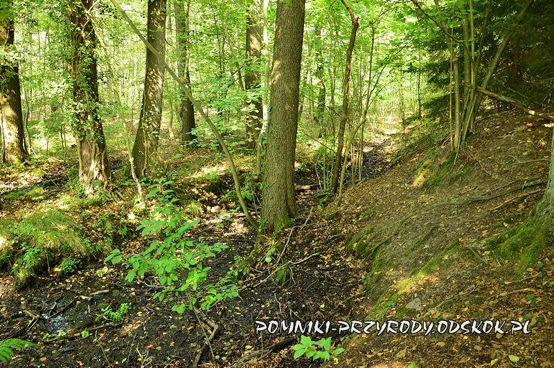 żródliska na trasie leśnej ścieżki edukacyjnej