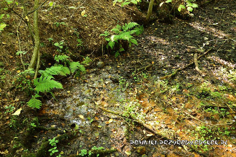 2. Leśne Źródlisko w Ochli