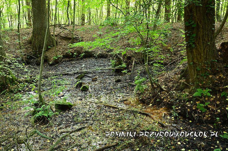 3. Leśne Źródlisko w Ochli