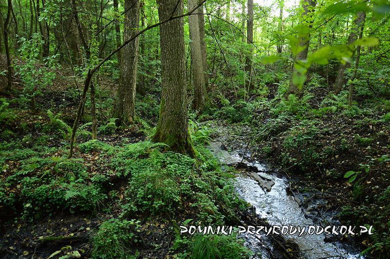5. Leśne Źródlisko w Ochli