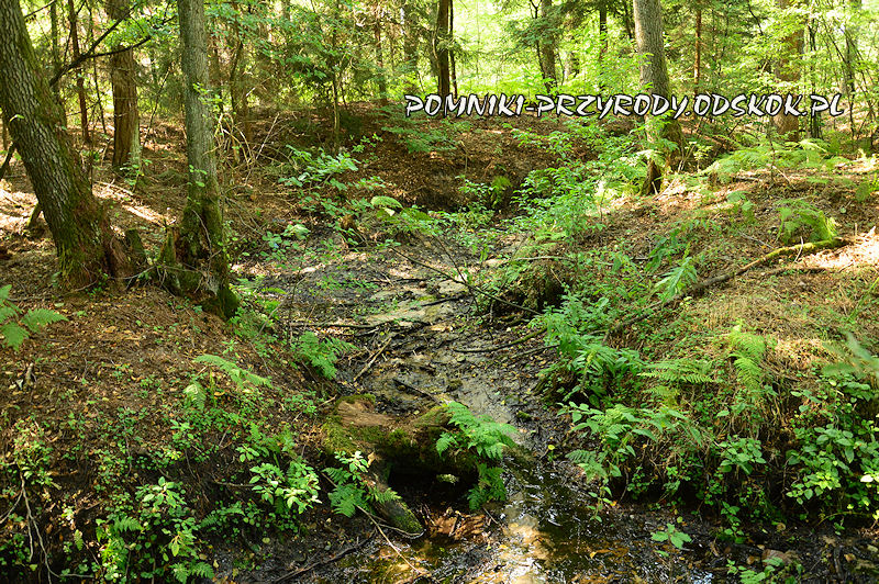 7. Leśne Źródlisko w Ochli