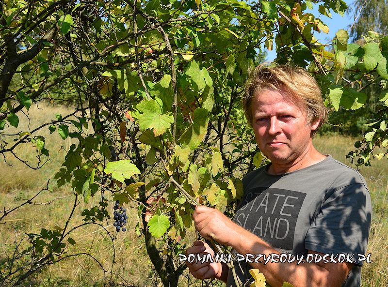 Krzysztof Fedorowicz przy pomnikowej winorośli