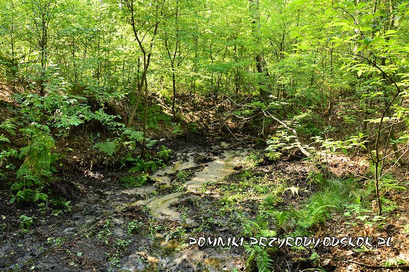 Leśne Źródlisko w Ochli - źródło głównego strumienia