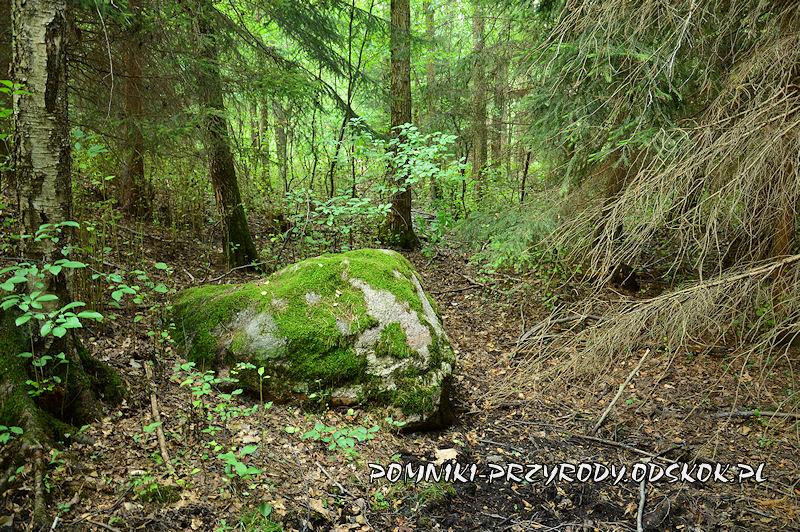 Leśne Źródlisko w Ochli - głaz narzutowy
