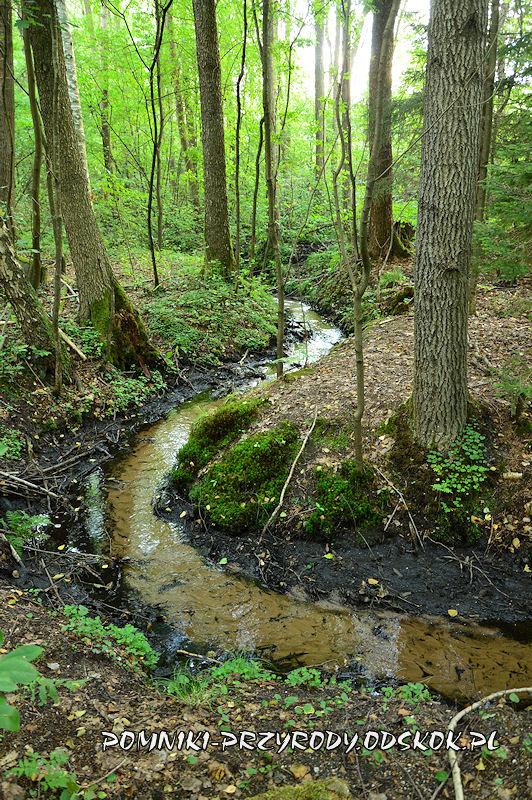 Leśne Źródlisko w Ochli - meandrujący strumień