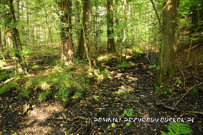 Leśne Źródlisko w Ochli - podmokły teren na trasie ścieżki edukacyjnej