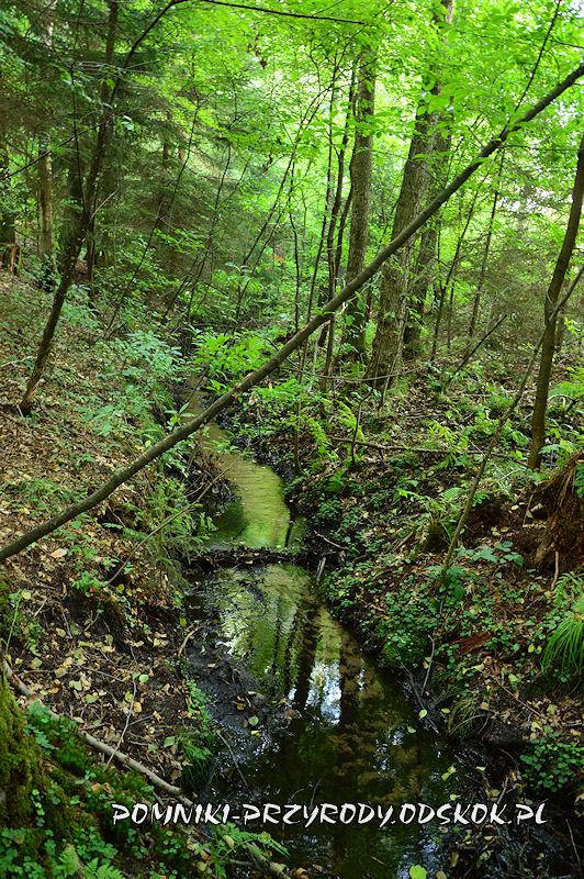 ciek wodny w Leśnym Źródlisku w Ochli