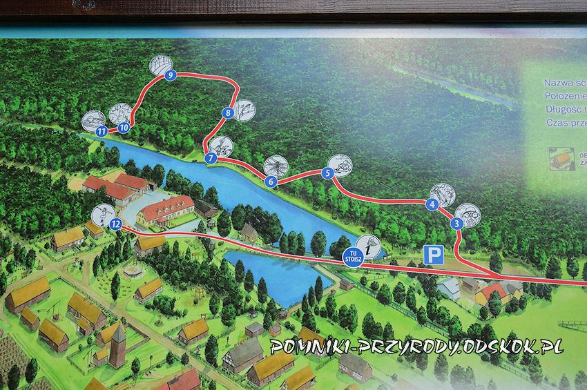 mapa leśnej ścieżki edukacyjnej