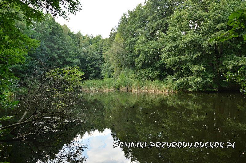 staw na terenie pomnika przyrody Leśne Źródlisko