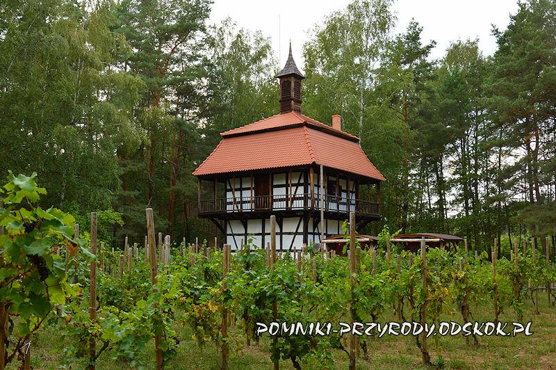 winnica przy Muzeum Etnograficznym w Zielonej Górze - Ochli