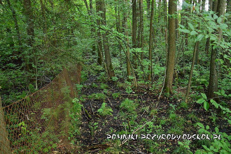 zabagniony teren na obszarze Leśnego Źródliska