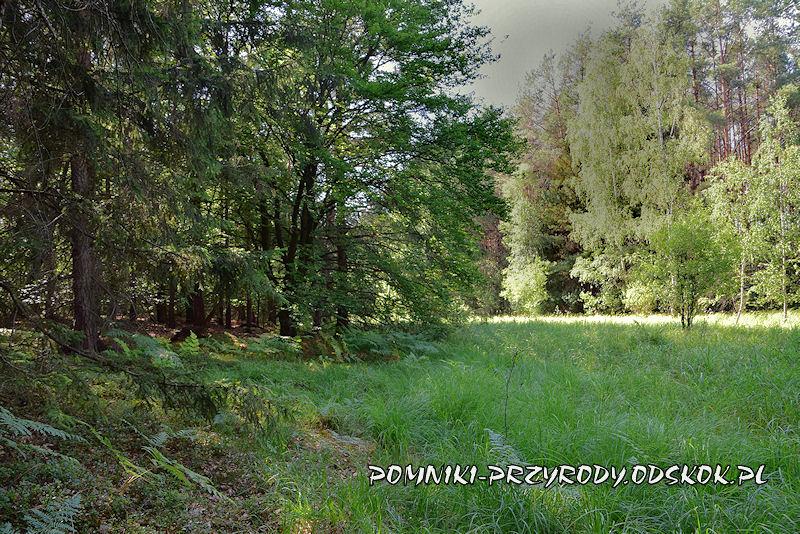 Karszyn - zabagniony teren przy stanowiskach długosza