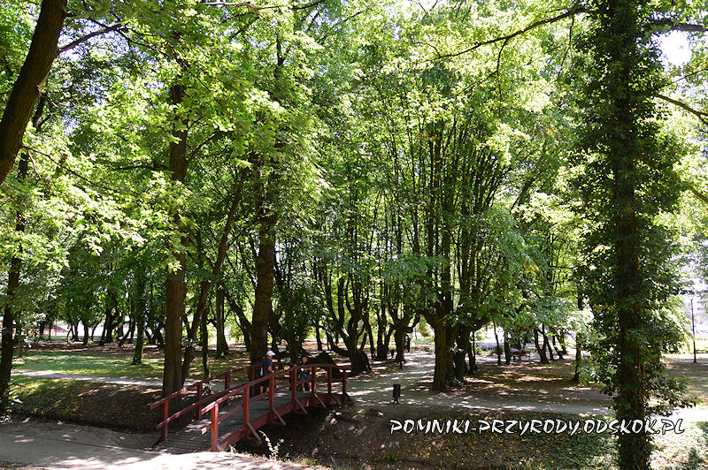 mostek w parku przypałacowym w Kargowej