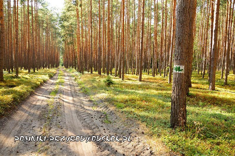 na ścieżce dydaktycznej Zakątki Karszyna