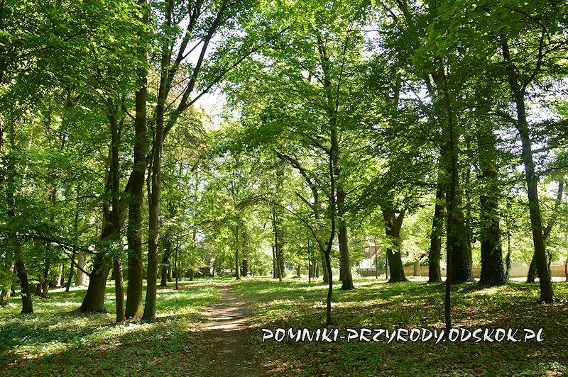 Kolsko - aleja parkowa