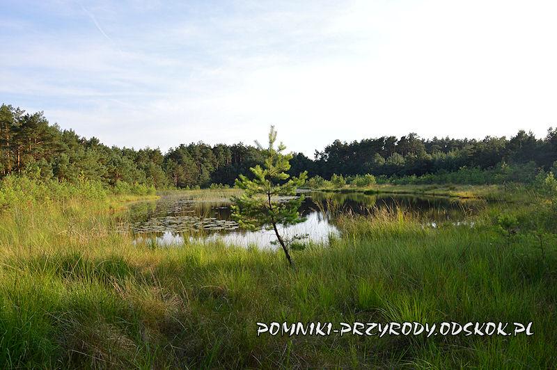 Nadleśnictwo Wolsztyn - użytek ekologiczny Karasiowy Stawek