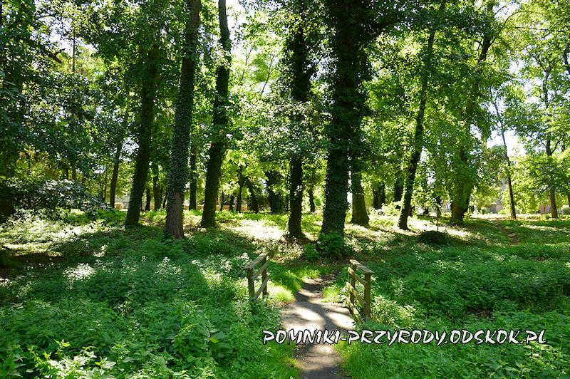 mostek w parku przypałacowym w Kolsku