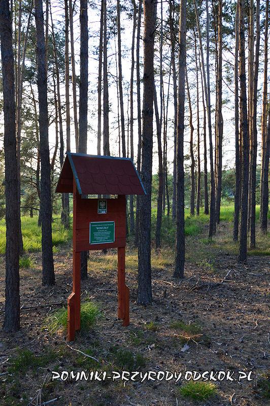 tablica przed powierzchniowym pomnikiem przyrody Rosiczka