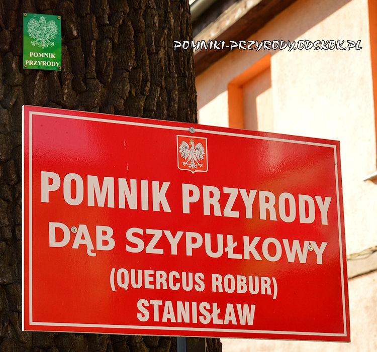 tablica przy dębie Stanisław