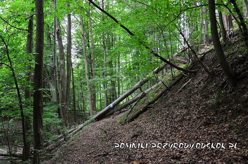 trasa ścieżki dydaktycznej poniżej Siedmiu Sówek