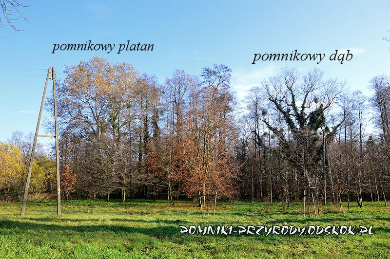 Szydłowiec Śląski - pomnikowy dąb i platan