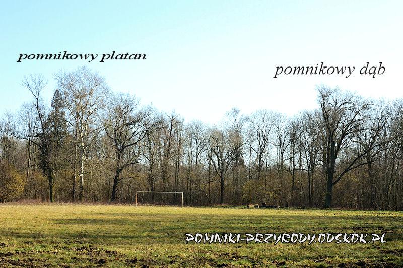 park w Ramułtowicach - pomnikowy dąb i platan