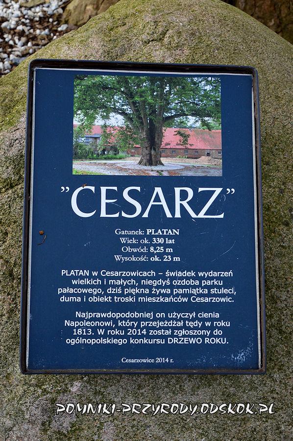 tablica przed platanem Cesarz