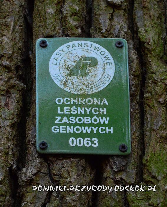 tabliczka - Ochrona Leśnych Zasobów Genowych nr 0063