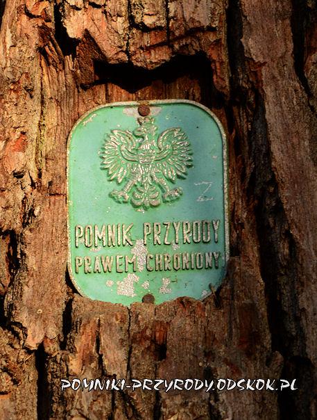 tabliczka na dębie Bartek ze Szczepanowa