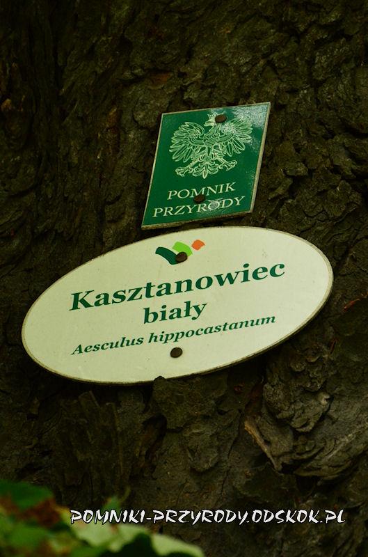tabliczki na kasztanowcu w Lubiechowie