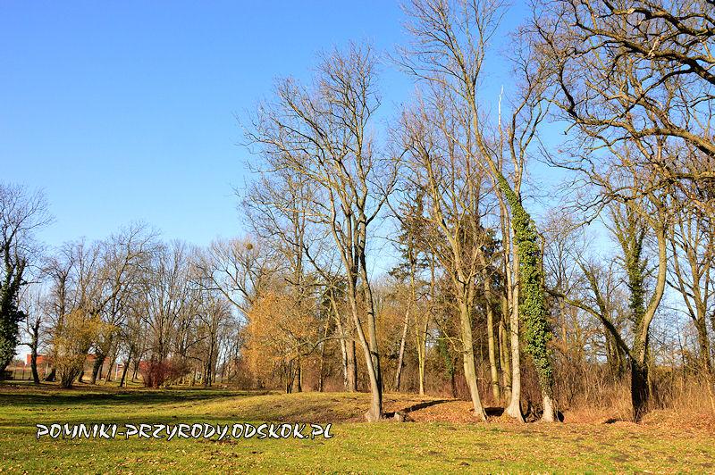 zewnętrzna część parku w Ramułtowicach