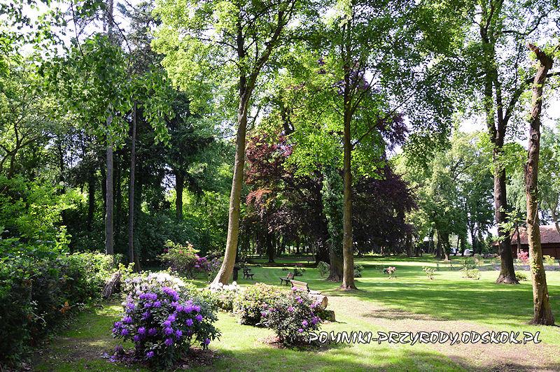 fragment parku w Dalkowie